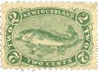 Newfoundland_Cod