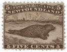 Newfoundland_Seal