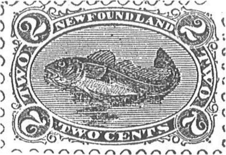 Newfoundland_Codfish_2c_Torres_illustration